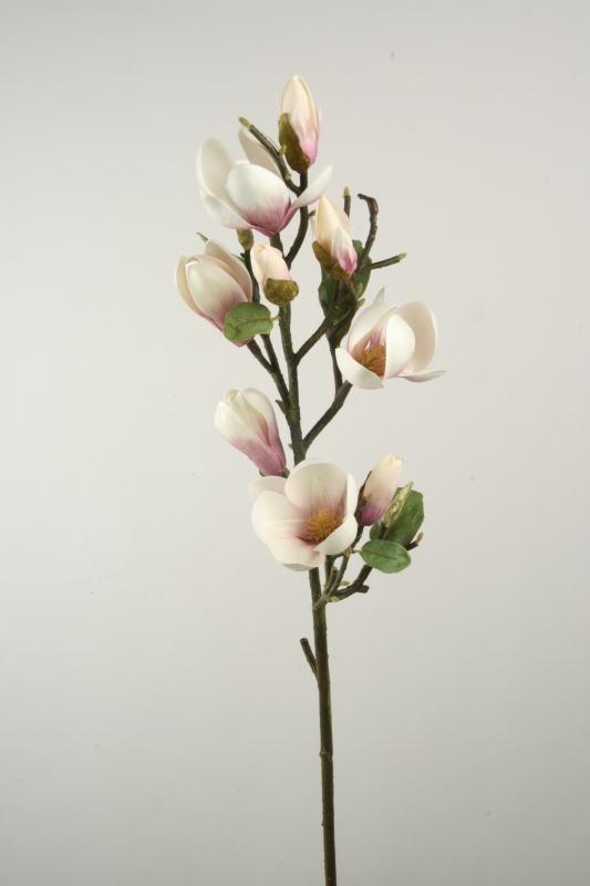 Magnolia 81cm