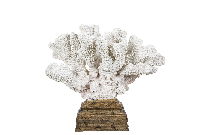 Korall på tresokkel