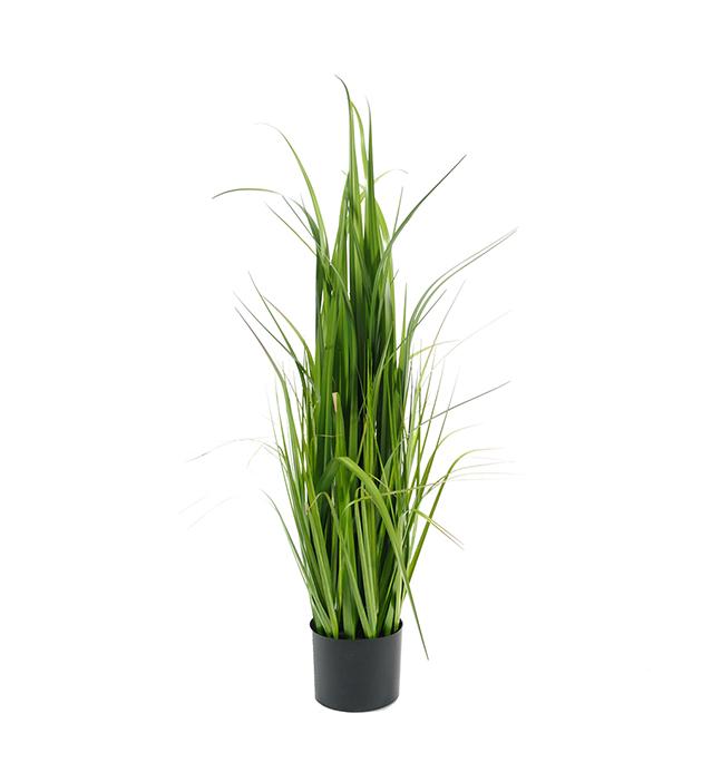 Gras 100 cm