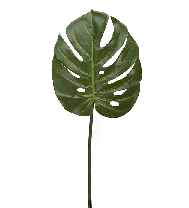 Monstera blad, grønn. 60cm