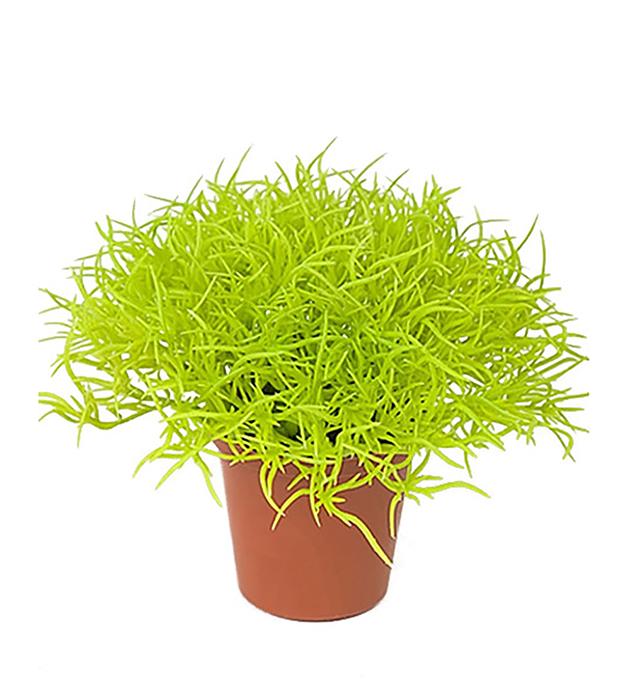Gras, lys grønn. 6x10cm