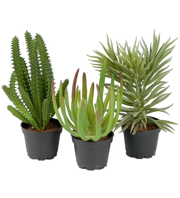 Succulentmix 15cm. ASS
