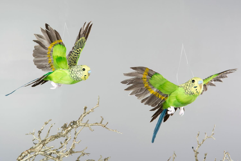 Undulat flyvende grønn - 20x25x10cm