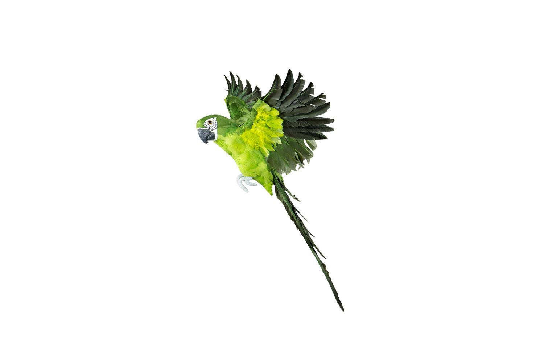 Papegøye, flyvende grønn, liten